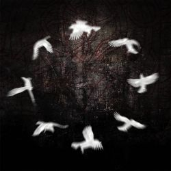 Reviews for A Circle of Crows - A Circle of Crows