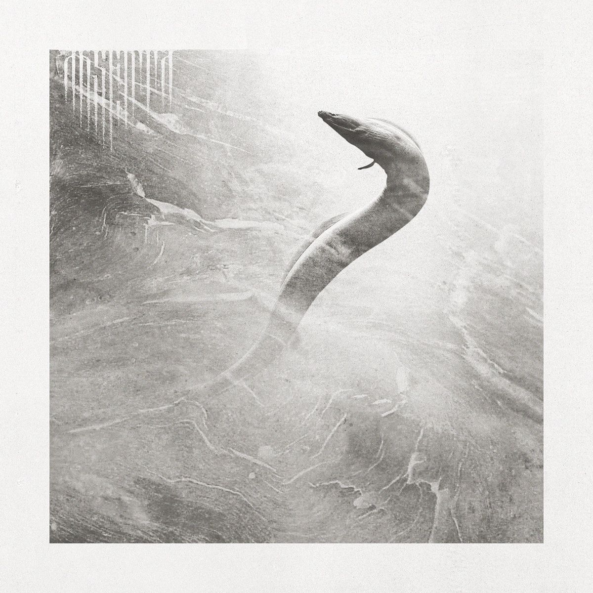 Reviews for Absenta - Eel