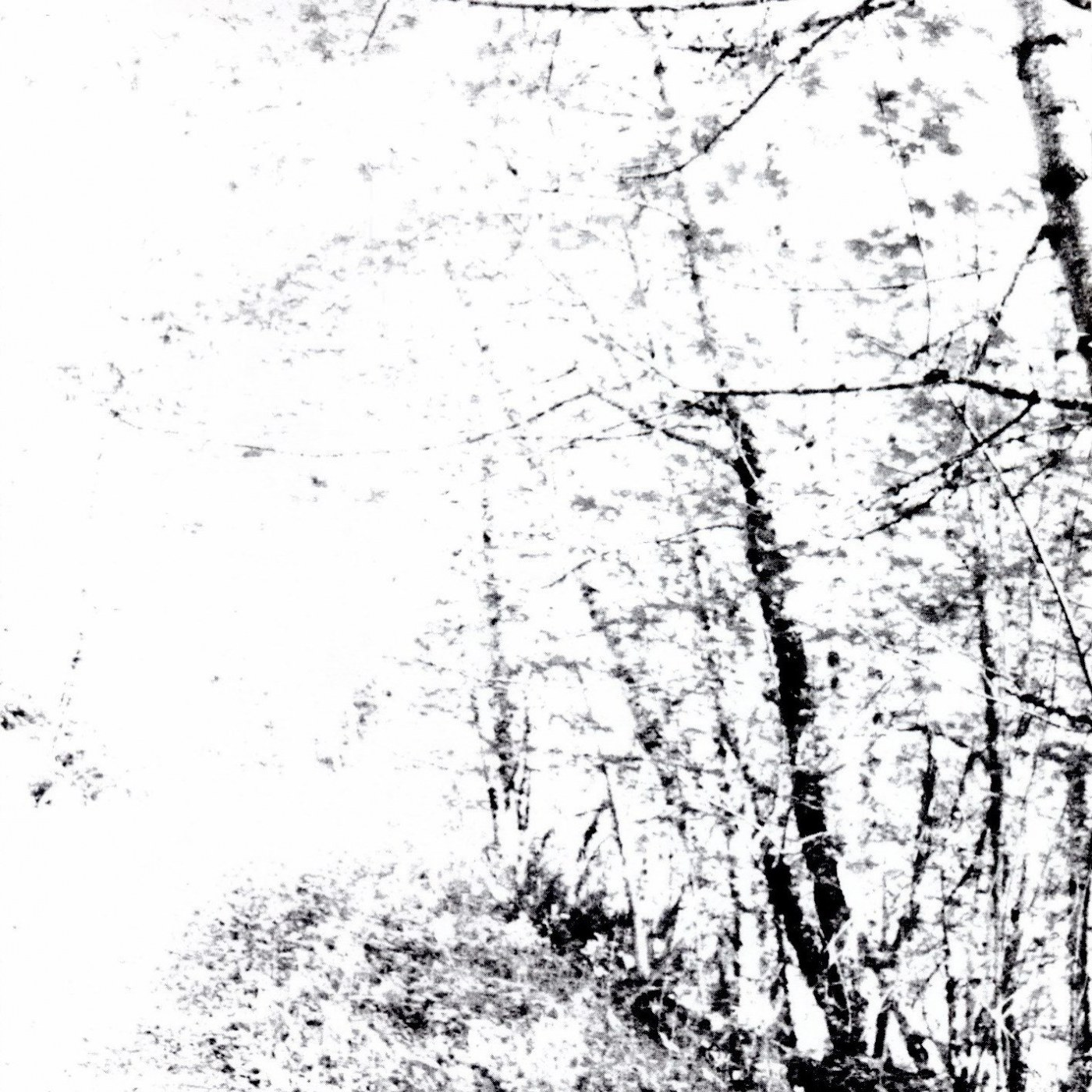 Review for Agalloch - The White EP