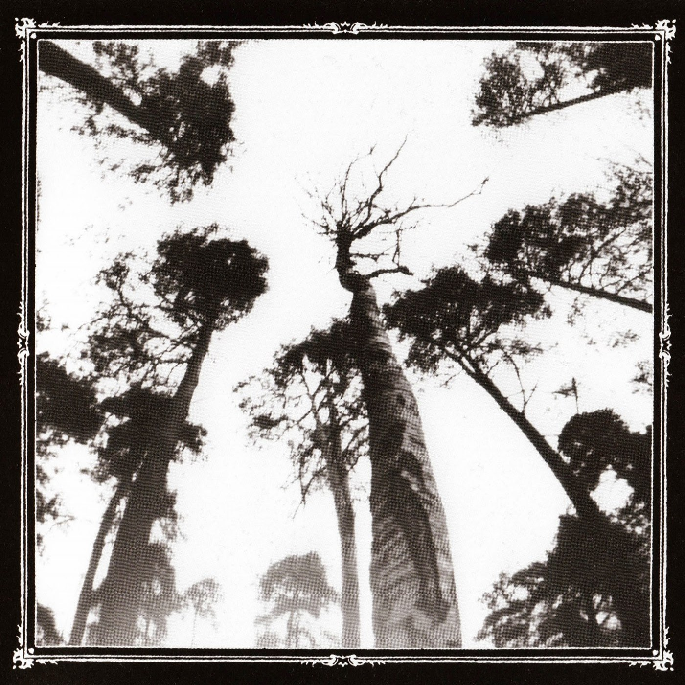 Ancestors Blood - When the Forest Calls