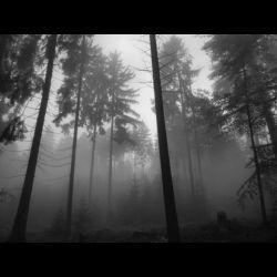 Review for Archipelagos - I