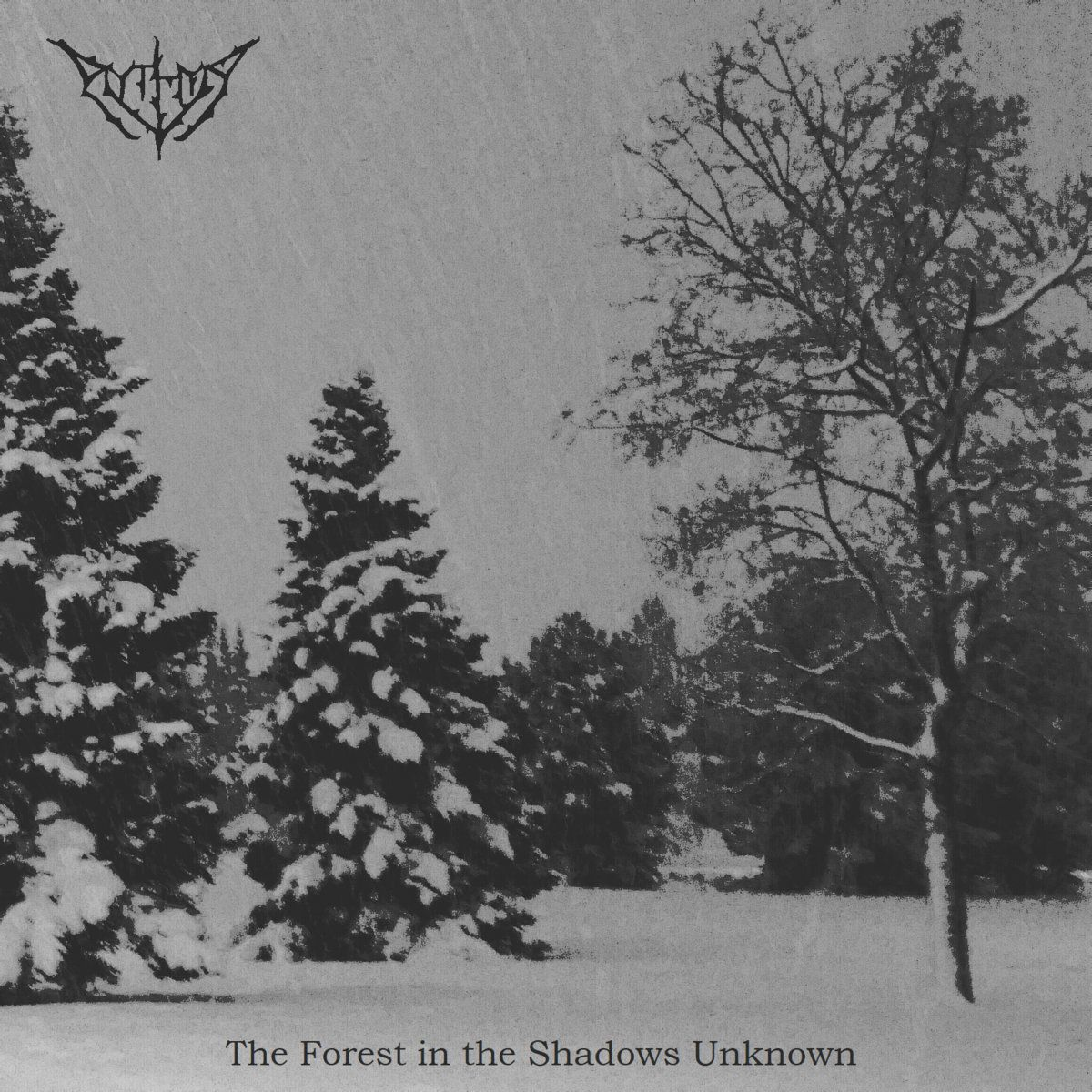 Review for Aythya - The Forest in the Shadows Unknown