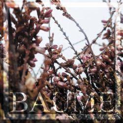 Review for Baume - L'Odeur de la Lumière