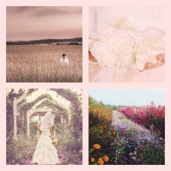 Reviews for Blackseason - Aesthetics of a Wedding