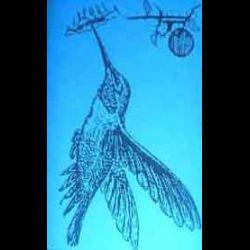 Reviews for Blue Hummingbird on the Left - Bloodflower