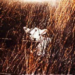 Carnyx (GBR) - Unforgiving Nature