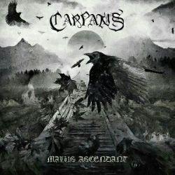 Reviews for Carpatus - Malus Ascendant