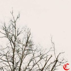 Review for Circle - Apathy