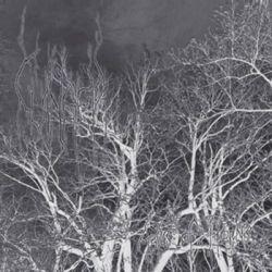 Review for Cvinger - Abyss of Horns