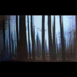 Dreamer's Seal - Through Woods of Obscure Solitude