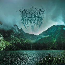 Drimys Winteri - Excelsa Natura