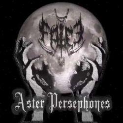 Falce - Aster Persephones