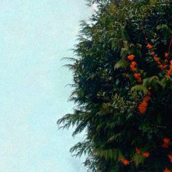 Review for In Autumnus - Intrusiveless