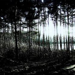 Living Monstrosity - On Rainy Nights