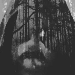 Mors Evolvas - The Count