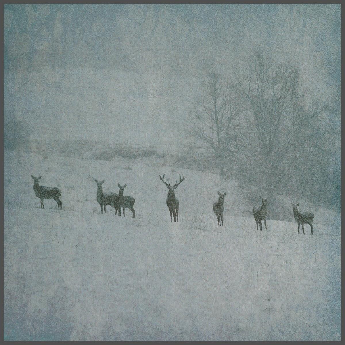 Rauhnåcht (AUT) - Winterstille