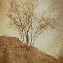 Ruinas/Raíces - Restos