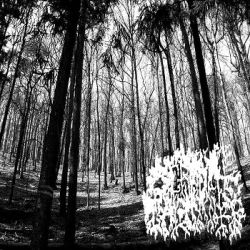 Reviews for Screech Calamity - Cold World