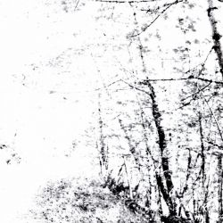 Reviews for Agalloch - The White EP