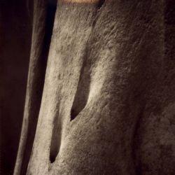 Reviews for Nevoa (PRT) - Towards Belief