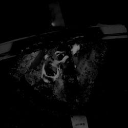 Reviews for Psychomantia - Natal Quietus