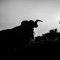 Reviews for Triumphalia - Sacrifice of the Goat Moon