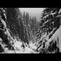 Staryj Kiev / Старый Киев - Carpathian Zombies
