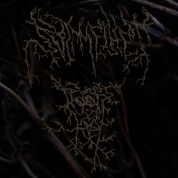 Review for Svimmelhet - Roots