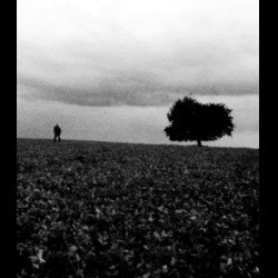Reviews for The Wandering - Demotions
