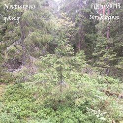 Urskogen - Naturens Gång