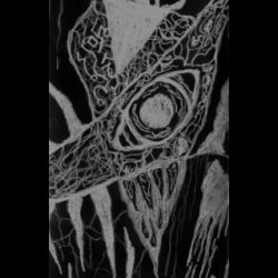 Vetëvrakh - Demo II