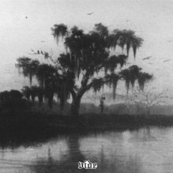 Reviews for Vide (USA) [α] - Hanging by the Bayou Light