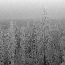 Vintlechkeit - Likene i Snøen...