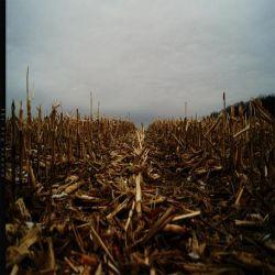 Reviews for Vit - The Dry Season