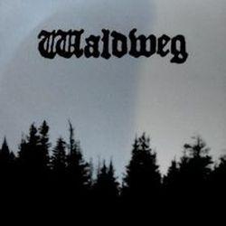 Waldweg - Waldweg