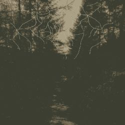 When Woods Make Graves - This Light That Decays